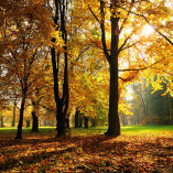 autumn_season-1920x1200.jpg